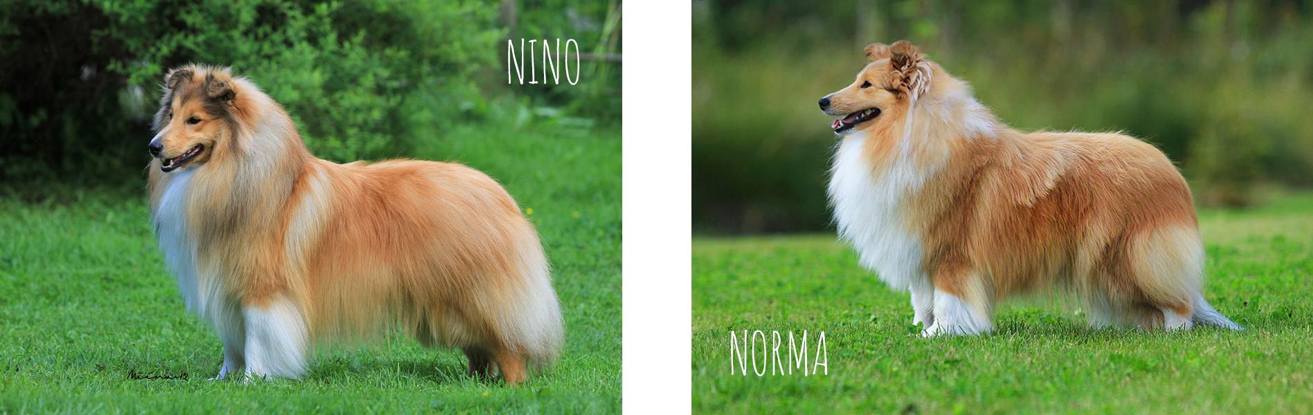 nino_norma